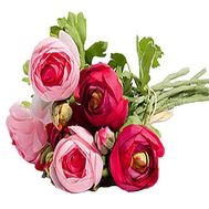 Ranunculus bouquet - flowers and bouquets on df.ua