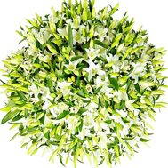 The most beautiful bouquet of 101 lilies - flowers and bouquets on df.ua
