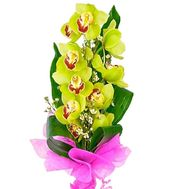 Green orchid branch - flowers and bouquets on df.ua