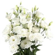 Bouquet of white eust - flowers and bouquets on df.ua