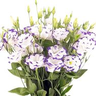 Bouquet with an eustoma - flowers and bouquets on df.ua