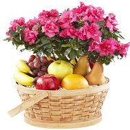 Flower in a pot and fruits in a basket - flowers and bouquets on df.ua