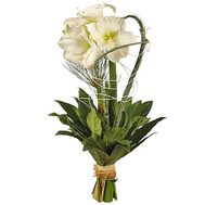 Amaryllis white - flowers and bouquets on df.ua