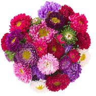 Aster flowers to buy - flowers and bouquets on df.ua