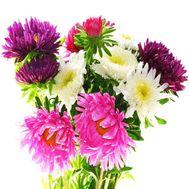 Букет астр - цветы и букеты на df.ua
