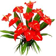 Bouquet of 11 red anthuriums with greens - flowers and bouquets on df.ua