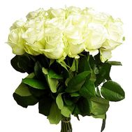 17 white roses - flowers and bouquets on df.ua