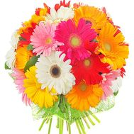 Bouquet of different color gerberas - flowers and bouquets on df.ua