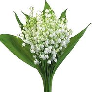 A bouquet of lilies of the valley - flowers and bouquets on df.ua