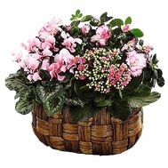 Flower arrangement from houseplants - flowers and bouquets on df.ua