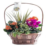 Composition of potted flowers in a basket - flowers and bouquets on df.ua