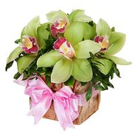 Box of flowers with orchids - flowers and bouquets on df.ua