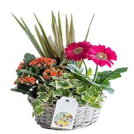Basket with flowers in pots - flowers and bouquets on df.ua