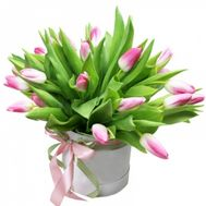 21 pink tulips in a box - flowers and bouquets on df.ua