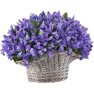 151 blue iris in the basket - flowers and bouquets on df.ua
