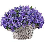 151 синий ирис в корзине - цветы и букеты на df.ua