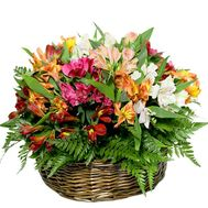 Alstroemeria in the basket - flowers and bouquets on df.ua
