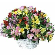 Large basket of alstromeries - flowers and bouquets on df.ua