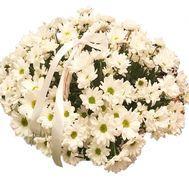 Букет из ромашек в корзине - цветы и букеты на df.ua