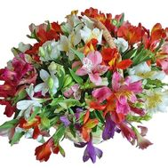 Arrangement of alstroemerias in basket - flowers and bouquets on df.ua