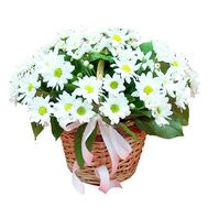 Basket of white daisy chrysanthemums - flowers and bouquets on df.ua