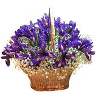 Basket of irises with gypsophila - flowers and bouquets on df.ua