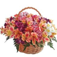 Basket of 25 Alstroemeria - flowers and bouquets on df.ua