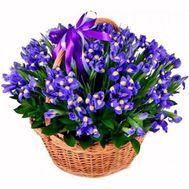 Корзина из 75 синих ирисов - цветы и букеты на df.ua