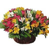 Colorful basket of alstromeries - flowers and bouquets on df.ua