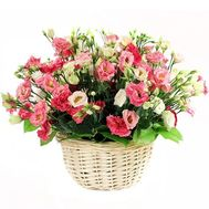 """Delicate basket with eustomams"" in the online flower shop df.ua"