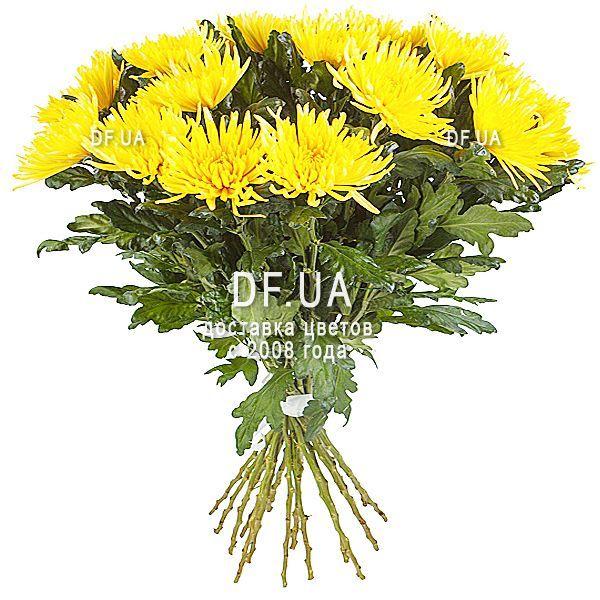 Купить букет из 15 желтых хризантем в Пензе в магазине цветов на ... | 600x600