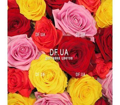 """""""37 разноцветных роз"""" в интернет-магазине цветов df.ua"""