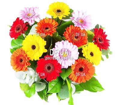 """Gerberas to buy"" in the online flower shop df.ua"
