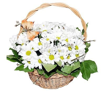 """""""Composition in a basket of chrysanthemums"""" in the online flower shop df.ua"""
