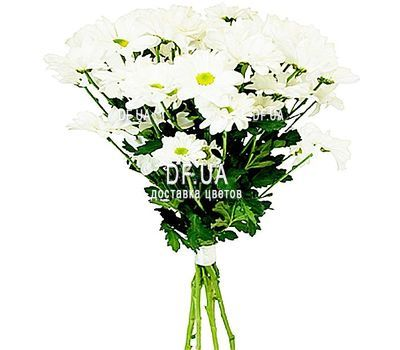 """""""Bouquet of white chamomiles"""" in the online flower shop df.ua"""