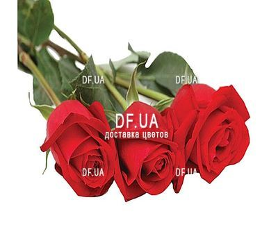 """""""3 imported red roses"""" in the online flower shop df.ua"""