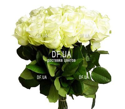 """17 white roses"" in the online flower shop df.ua"