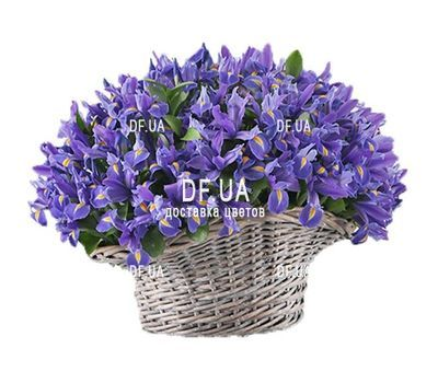 """""""151 синий ирис в корзине"""" в интернет-магазине цветов df.ua"""