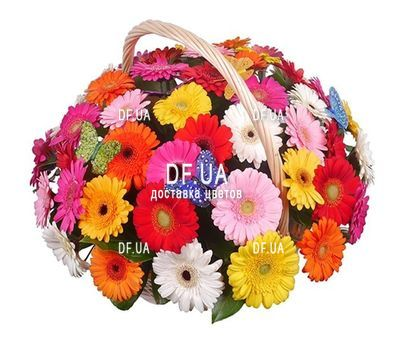 """51 gerberas in basket"" in the online flower shop df.ua"