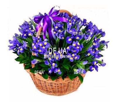 Basket of 75 blue irises