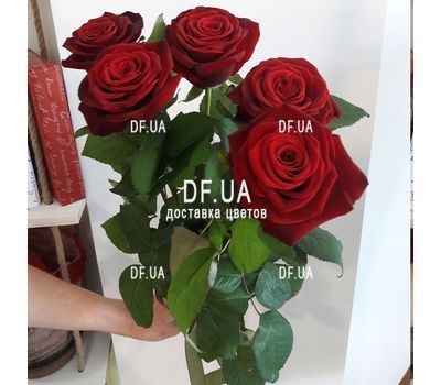 """5 red roses view 4"" in the online flower shop df.ua"