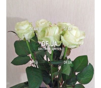 """Small bouquet of 5 roses view 2"" in the online flower shop df.ua"