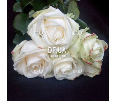 """Small bouquet of 5 roses view 3"" in the online flower shop df.ua"