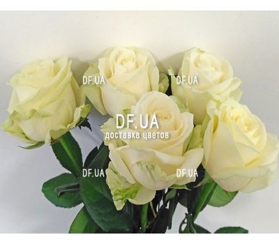 """Small bouquet of 5 roses view 4"" in the online flower shop df.ua"