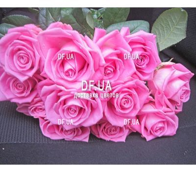 """11 pink roses - view 2"" in the online flower shop df.ua"