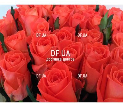 """51 roses bouquet - view 3"" in the online flower shop df.ua"