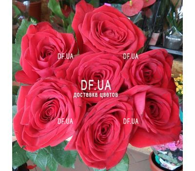 """7 red roses - view 3"" in the online flower shop df.ua"