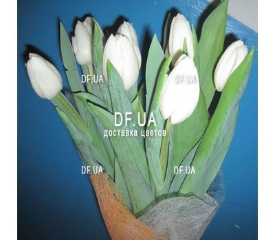 """White tulips - view 1"" in the online flower shop df.ua"