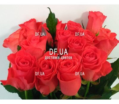 """Bouquet 15 coral roses - view 2"" in the online flower shop df.ua"