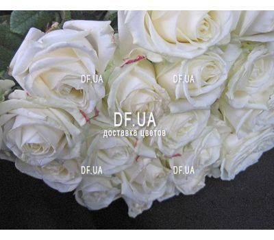 """""""19 white roses bouquet - view 1"""" in the online flower shop df.ua"""